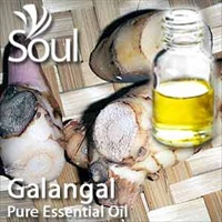 Pure Essential Oil Galangal - 10ml